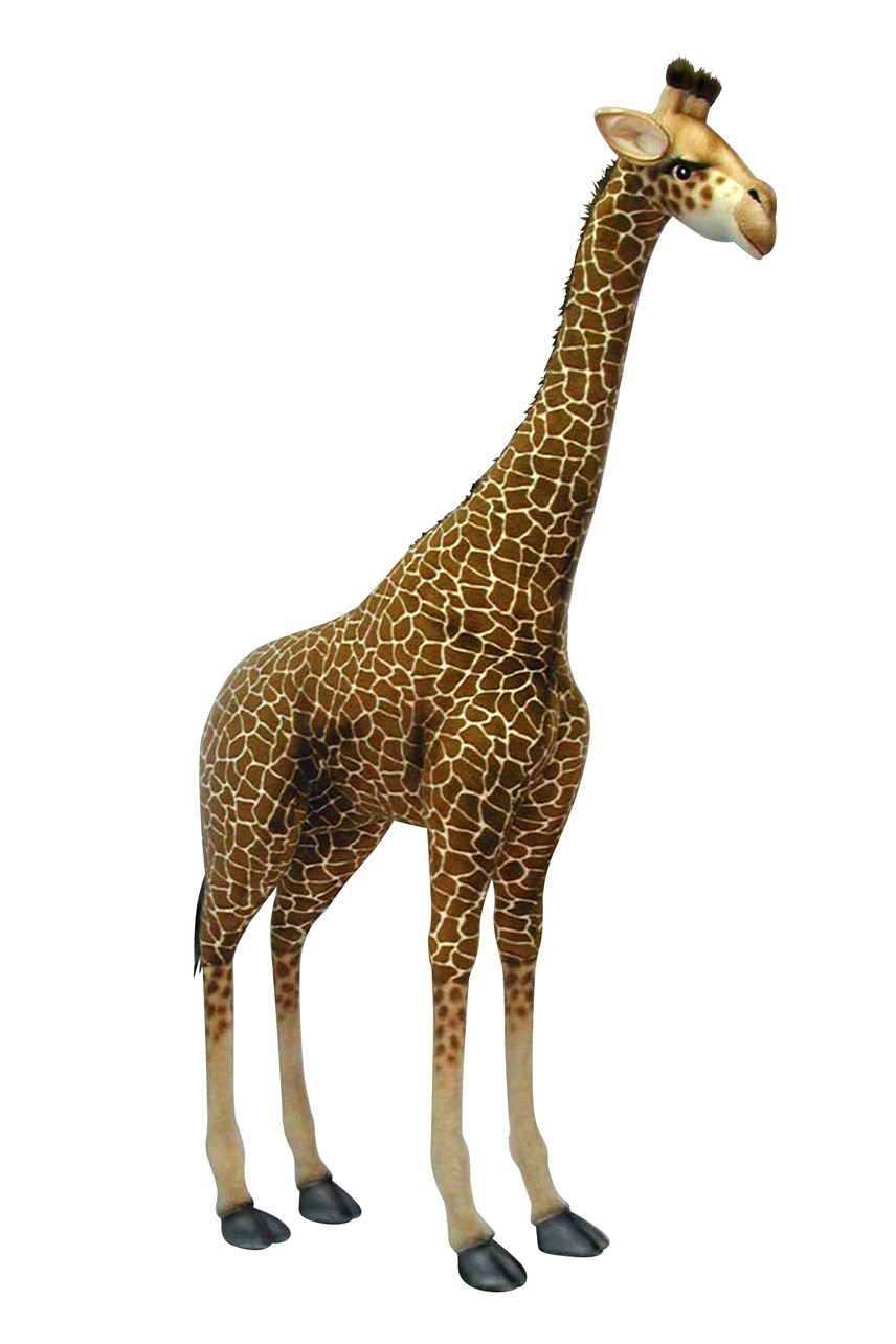 Giraffe 165cm Height