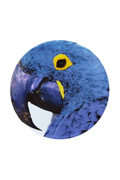 'Olhar o Brasil' Blue Macaw Charger Plate 1