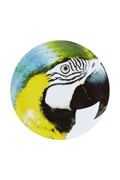 'Olhar o Brasil' Yellow Bellie Macaw Charger Plate 1