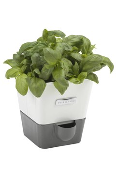 Single Self Watering Herb Keeper 1