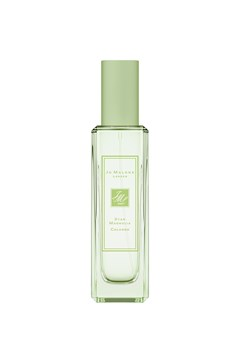 Star Magnolia Cologne -